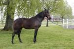 hästkort tillsalu 2012 023